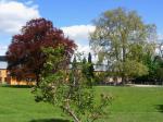 Schloßpark im Frühling